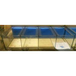 Aquarium 120x50x30 cm / 4 Abteilungen