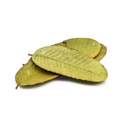 Guava leaves - 12 pieces