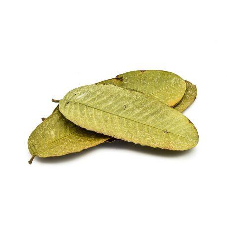 Guaven Blätter